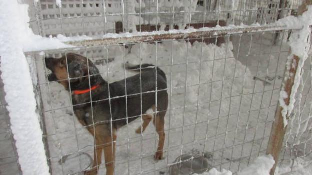 ГАВРА С КУЧЕТА: Живеят в клетки пълни със сняг