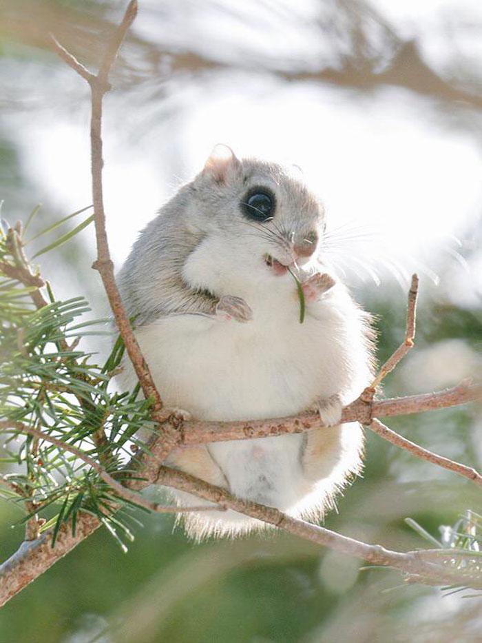 cute-animals-hokkaido-ezo-japan-22