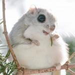 Вижте най-сладкото животно на планетата