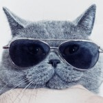 Как да бъдеш котка? (Наръчник)