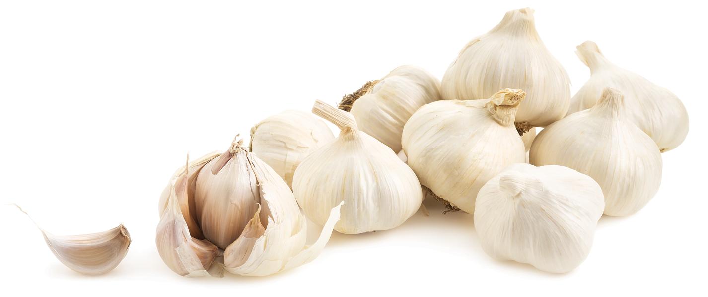 GarlicFestGarlic