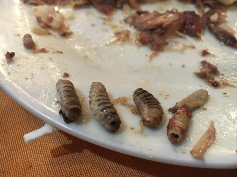 larvi-2