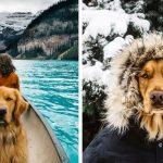 УНИКАЛНО: Фотограф снима кучето си в епични кадри в дивата природа. ВИЖ СНИМКИТЕ!