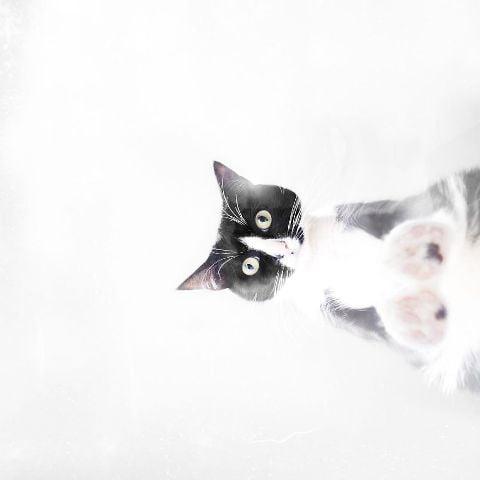cat-portraits (1)