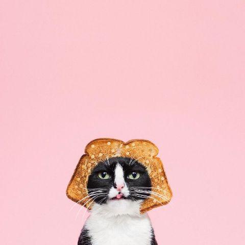 cat-portraits (11)
