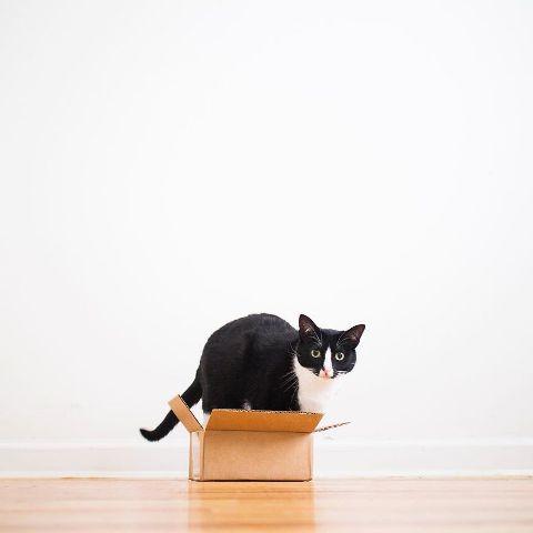 cat-portraits (12)