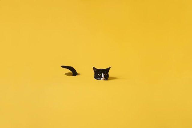 cat-portraits (15)