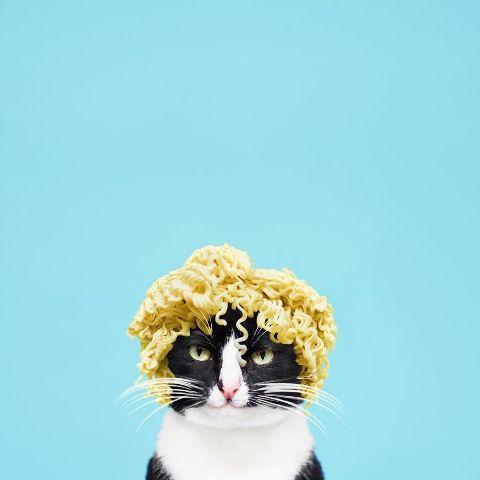 cat-portraits (16)
