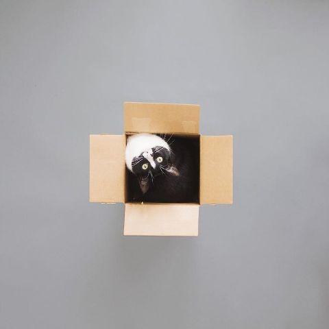 cat-portraits (17)