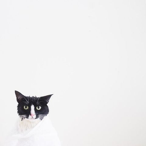 cat-portraits (18)