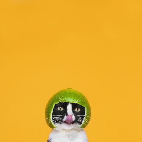 cat-portraits (19)