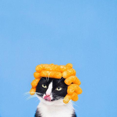 cat-portraits (21)