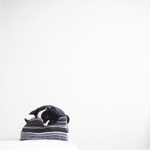 cat-portraits (23)