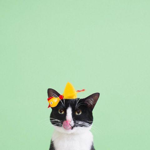 cat-portraits (25)
