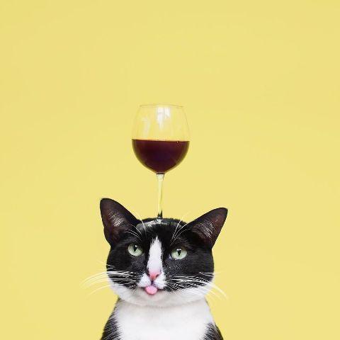 cat-portraits (27)
