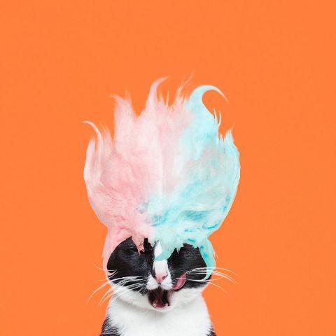 cat-portraits (29)
