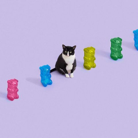 cat-portraits (30)