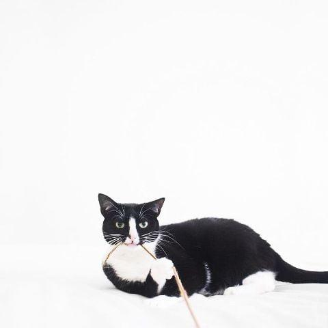 cat-portraits (31)