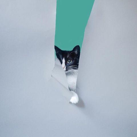 cat-portraits (32)