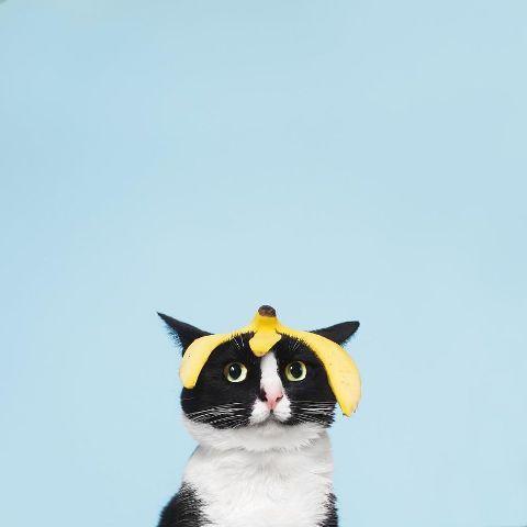 cat-portraits (33)