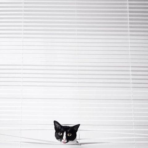 cat-portraits (34)