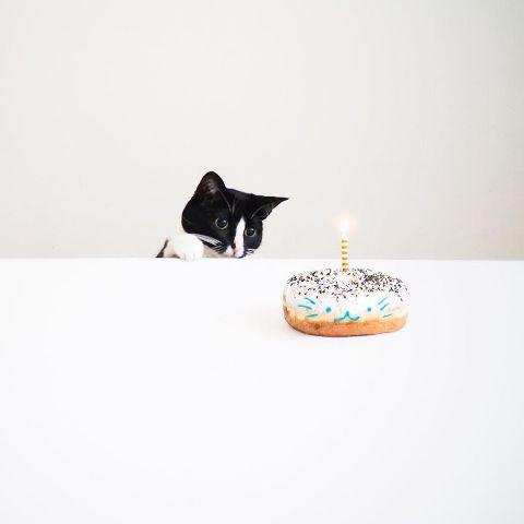 cat-portraits (35)