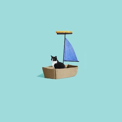 cat-portraits (37)
