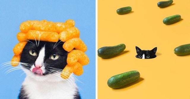 cat-portraits (39)