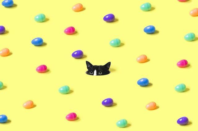 cat-portraits (4)