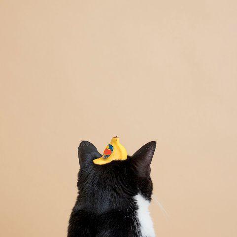 cat-portraits (41)