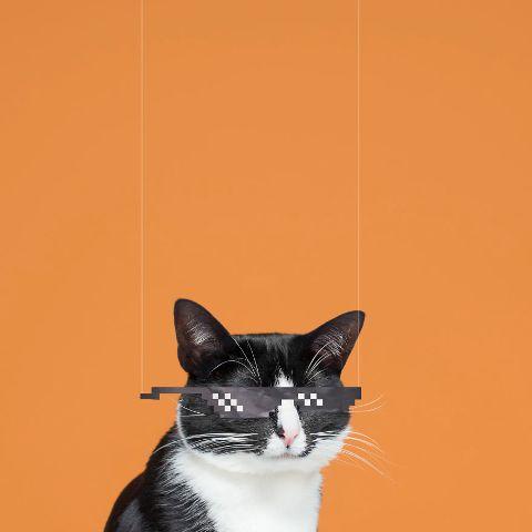 cat-portraits (42)