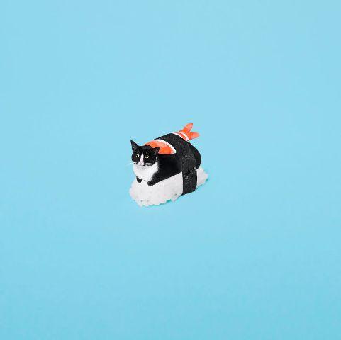 cat-portraits (43)
