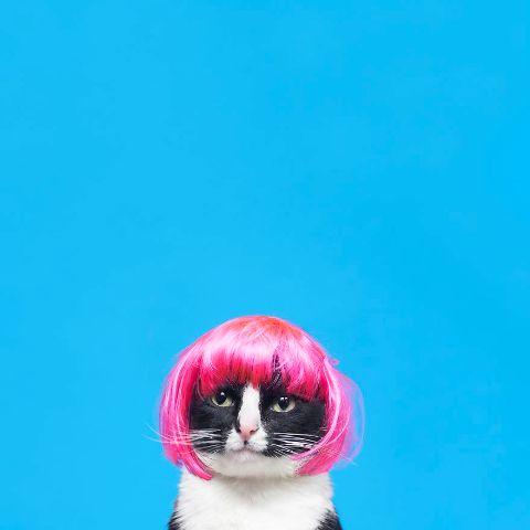 cat-portraits (44)