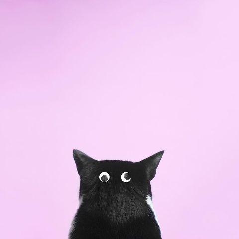 cat-portraits (48)