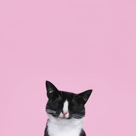 cat-portraits (5)