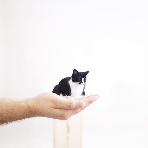 cat-portraits (50)