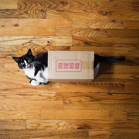 cat-portraits (51)