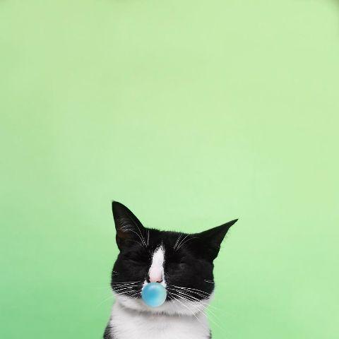 cat-portraits (52)