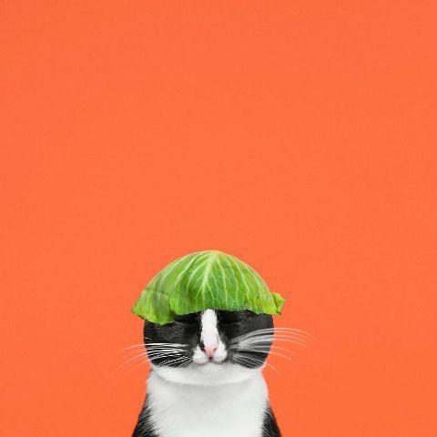 cat-portraits (9)