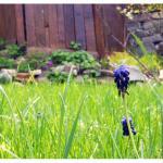Честита първа пролет!