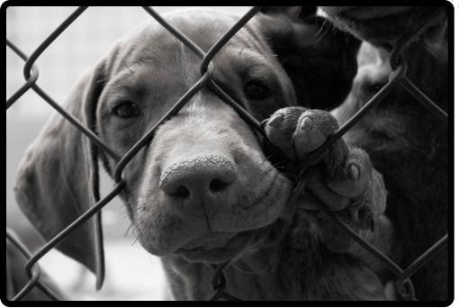 Приют за животни