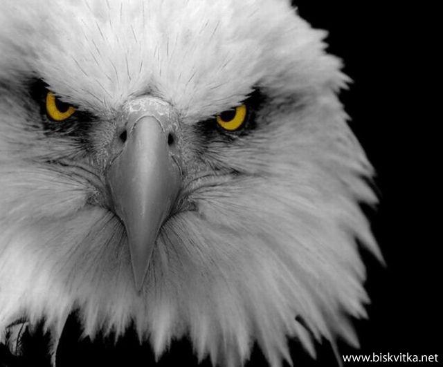 Орлов поглед