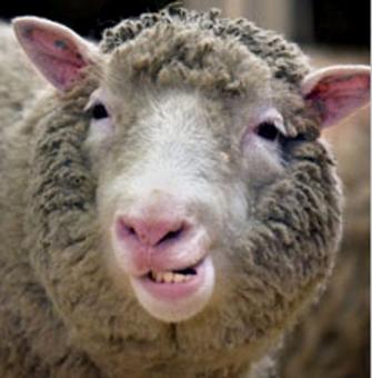 Овцата Доли