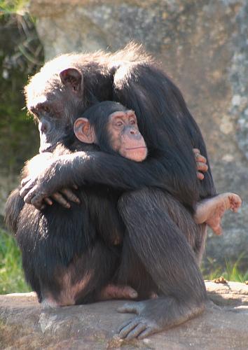 Най-лошите майки сред животинския свят