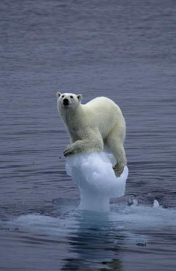Северния полюс