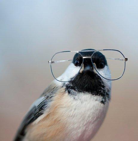 съюз на прелетните и непрелетните птици